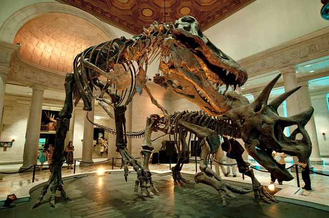 Natural History Museum bcuzuluvme blog